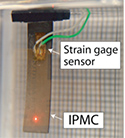 Tracking control of oscillatory motion in IPMC actuators for underwater applications